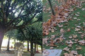 As folhas já estão caindo, sinal que temos que aproveitar o restinho de verão, logo logo o frio chega!